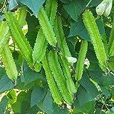 Oce180anYLVUK Semi di fagioli alati, 100 pezzi/borsa Semi di fagioli alati Non OGM Paesaggio Pianta Piantare piantine di ortaggi per cortile Winged Bean Seeds
