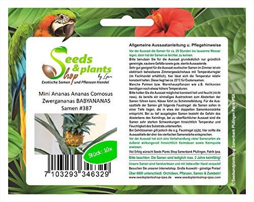 Stk - 10x Mini Ananas Comosus Zwergananas BABYANANAS Obst Samen #387 - Seeds Plants Shop Samenbank Pfullingen Patrik Ipsa