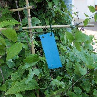 Blautafeln - Blausticker 20 Stück/5x12 cm - Leimtafeln für geflügelte Thrips
