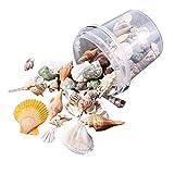 Metdek 500 g pura natural,decoración de conchas de acuario ecológicas, conchas mixtas, utilizadas para decoraciones principales, fiestas temáticas de bodas,decoración de acuario, artesanía en la playa