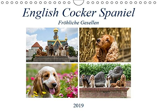 English Cocker Spaniel - Fröhliche Gesellen - Immer lächelnde English Cocker Spaniel (Wall Calendar 2019, 14 Pages, Size DIN A4 = 8.27 x 11.69 inches)