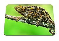 22cmx18cm マウスパッド (カメレオントカゲの枝) パターンカスタムの マウスパッド