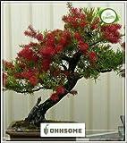 Semi Pinkdose Fiore Bonsai pianta australiana Callistemon Albero dei bonsai a All Season India Semi Kitchen Garden Seeds pack Seed