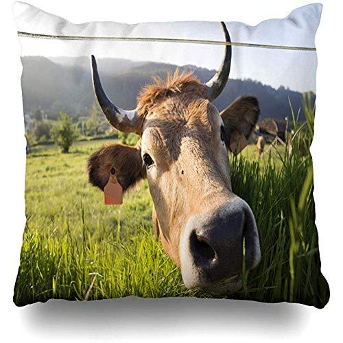 AmyNovelty Fundas de Almohada Granja Bonita de Campo de Ganado de Asturias de Vaca Natural para deco