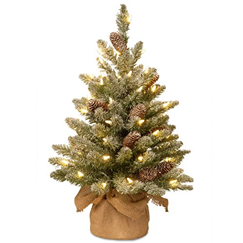 Tabletop Snowy Concolor Fir Tree with Battery Operated Lights and Pine Cones
