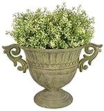 Con due maniglie laterali Con pratico foro di drenaggio Anche visivamente un vero colpo d'occhio Ideale per decorare il giardino Ideale per piantare piccole serre