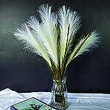 Artificial Pampas Grass 5 Pack, 70cm Faux Pampas Grass for Wedding Home Decor