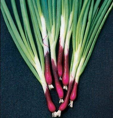 Seekay Ciboule Onion Rouge 'Allium Fistulosum' Environ 100 Graines