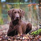 Chesapeake Bay Retrievers 2016 Wall Calendar