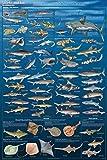 Feenixx Sharks and Kin Poster 24 x 36in