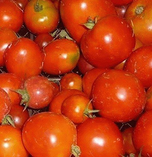 RWS 100 graines de tomate « Sibérie », la variété kälteunempfindliche de Sibérie