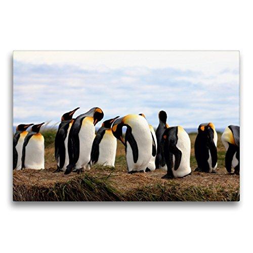 CALVENDO Premium Textil-Leinwand 75 x 50 cm Quer-Format Königspinguine, Patagonien, Feuerland, Chile, Leinwanddruck von Ute Köhler