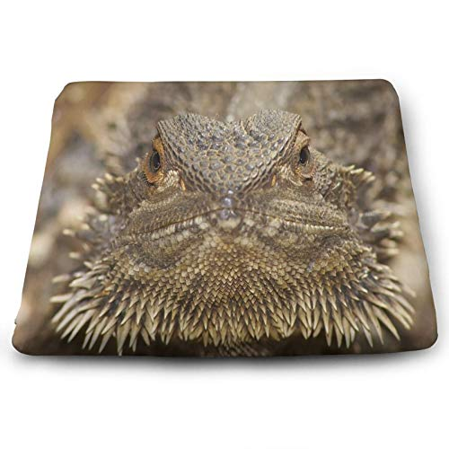 Cool Bearded Dragon Animal Lizard Special Chair Seat Cushions Pads Memory Foam Office Dining Kitchen Soft Chair Cushion Set Of 4 for Pressure Relief, Wheelchairs, Patio, Cafe, Garden, Indoor, Non Slip