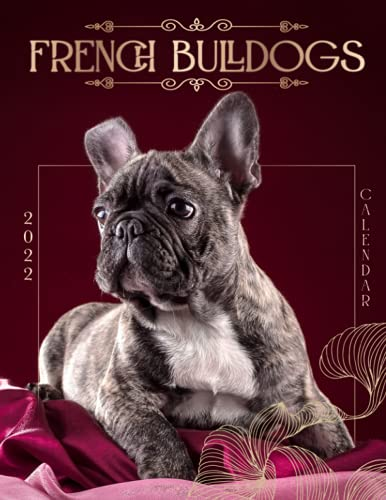 French Bulldogs Calendar 2022: 2022-2023 Calendar Animals- Animal Wildlife Calendar - Cute animal photos for animal lover gifts for kids