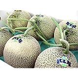 月形メロン 月雫 (つきのしずく) 合計8kg(4~6玉) 糖度14度以上 北海道産青肉めろん (優品)