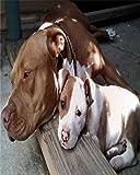 sfd54fgh54ghj54hj 5d DIY Diamant malerei Kits für Erwachsene Pit Bull pet Dog Bohren