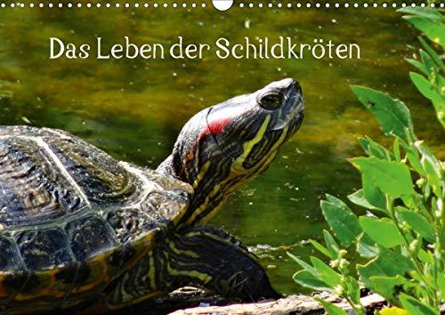Das Leben der Schildkröten (Wandkalender 2021 DIN A3 quer)