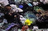 WZXHN Juegos de Pintura por números Peces de Acuario Submarino Coral Pintura por numeros para Adultos e Ni?os-con Marco