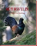 Auerwild: Die Hahnen vom Rosenkogel