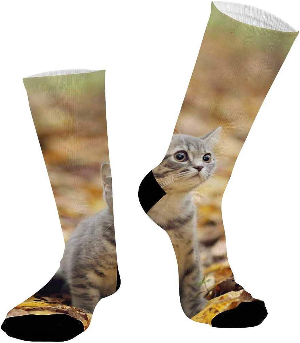 INTERESTPRINT Sublimated Hiking Dress Athletic Crew Socks Kitten Autumn Leaves Cat