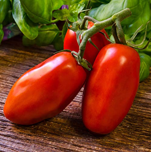 Sweet Yards Seed Co. Organic San Marzano Tomato Seeds – Over 75 Open Pollinated Heirloom Non-GMO Seeds