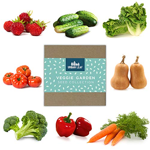 Vegetable Seed Variety Pack for Planting on Your Patio or Urban Garden - Tomato, Bell Pepper,...
