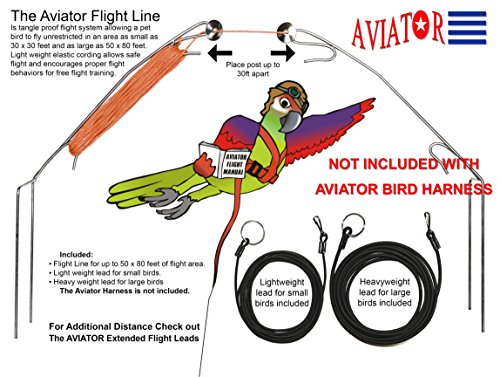 The AVIATOR El Arnés de Aves: Grande Verde: Amazon.es: Productos ...