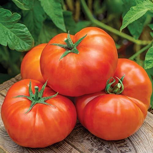 Burpee Jersey Boy Hybrid Beefsteak Slicing Tomato Heirloom Flavor 25 Seeds product image