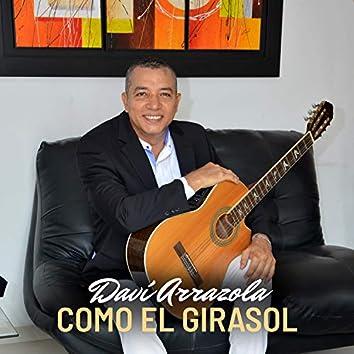 COMO EL GIRASOL