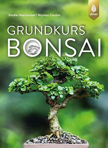 Grundkurs Bonsai