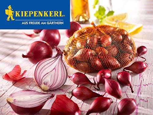 Kiepenkerl 611276 Rote Steckzwiebel (100 g) (Steckzwiebeln)