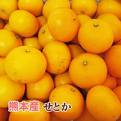熊本産 訳あり せとか 15kg 【 九州 熊本 セトカ みかん ミカン オレンジ 柑橘 】