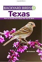 backyard birds of central texas