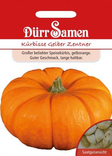 Dürr Samen 0065 Kürbis Gelber Zentner (Kürbissamen)