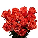 Mothers Day 50 Orange Roses - Fresh Flowers Delivery- Beautiful Bright Blooms