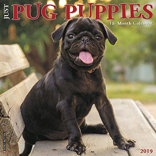 Just Pug Puppies 2019 Wall Calendar (Dog Breed Calendar)