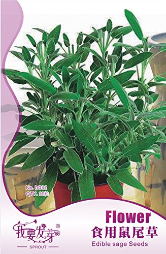 12 pcs / sac comestibles Sage, Pluriannuel médical Herb Bonsai Graines, décoration de la maison sécheresse durable plantes d'intérieur graines