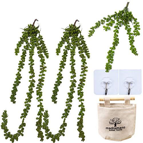 QAQGEAR Simulación Colgante Ratán Artificial Forma suculenta Vegetación Bonsai Plantas Hoja de Frijol Plectro Cesta Colgante Amante Lágrimas Cadena de Perlas Artificiales Planta Suculenta Fals