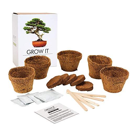 Monsterzeug Bonsaibaum zum Selber pflanzen, Bonsai Starterset, japanischer Baum Anbauset, Pflanzset mit Saatgut, Gärtner Geschenkset