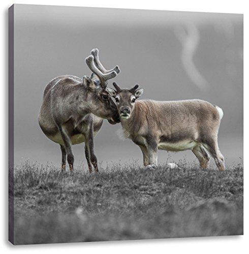Rendier knuffel met elkaarCanvas Foto Plein | Maat: 60x60 cm | Wanddecoraties | Kunstdruk | Volledig gemonteerd
