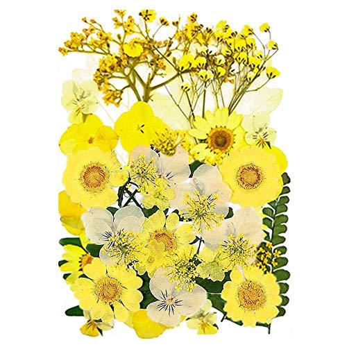 CUIFULI Flores secas para joyas de resina, flores prensadas secas naturales DIY mezcladas múltiples hojas secas pétalos para velas colgantes de uñas, manualidades, manualidades, decoración floral