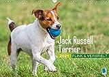 Jack Russell Terrier: flink und verspielt (Wandkalender 2021 DIN A3 quer)