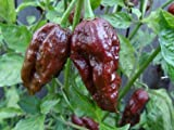 zumari 45pcs Trinidad moruga Scorpion Chocolate Pepper Semillas de hortalizas