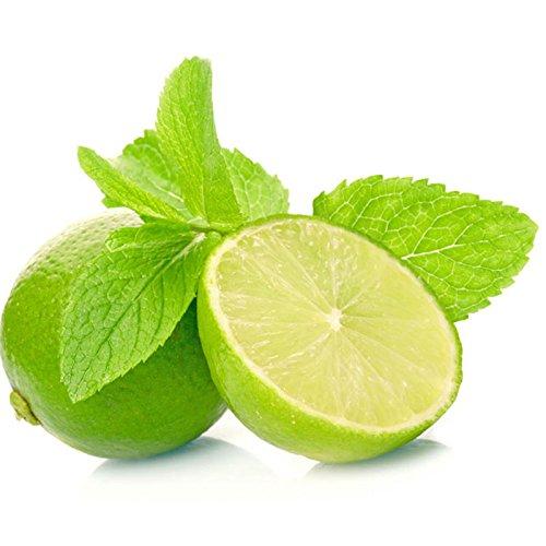 Lot de 200 graines aromatiques de citron, menthe, balcon, graines de légumes dans des pots de graines de citron, menthe poivrée