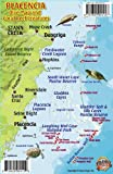 Placencia Belize Dive Map & Reef Creatures Guide Franko Maps Laminated Fish Card