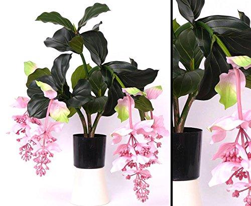 Medinilla, 4 Blüten, Höhe 80cm im Plastiktopf - Kunsblumen künstliche Blumen Kunstpflanzen künstliche Pflanzen Blumen