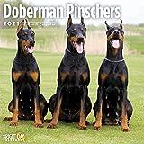 2021 Doberman Pinschers Wall C...
