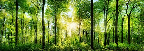 PICSonPAPER Poster Wald Panorama, 110 cm breit x 40 cm hoch, Dekoration, Kunstdruck, Wandbild, Fineartprint, Panorama Kunstdruck, Landschaft Bäume Wald, Premium Qualität