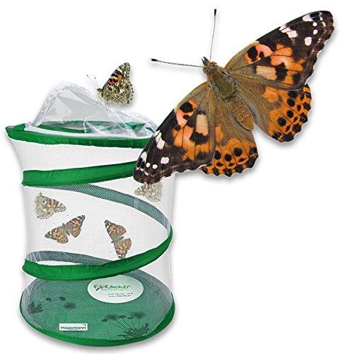 Hagemann - Schmetterlinge züchten - Schmetterlingsraupen Tiere züchten Insekten Schmetterling-e Forscherset für Kinder