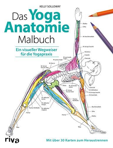 Das Yoga-Anatomie-Malbuch: Ein visueller Wegweiser für die Yogapraxis. Mit über 30 Karten zum Heraustrennen